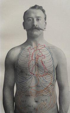 Antique 1900s Medical Diagram Scientific Print Human Anatomy Stomach Bowels 1908 | eBay