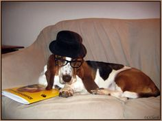 Glasses basset