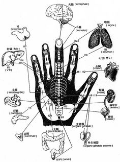 Acupuncture, Human Body Anatomy, Yoga, Massage, Cute Animals, Peace, Hand Therapy, Dots, Nervous System