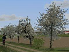 Frühlingsvegetation