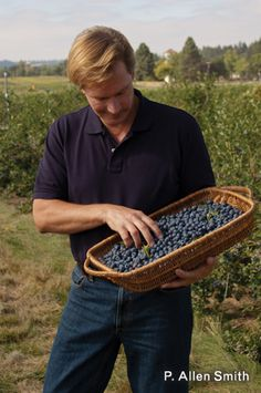 P Allen Smith: berry good tips for growing blackberries, raspberries  blueberries