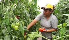La agricultura sostenible puede combatir el hambre y la pobreza
