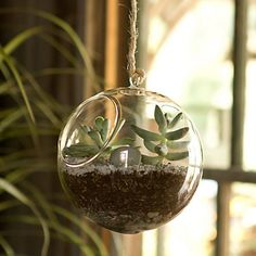 This beautiful glass orb is a new twist on a classic. With a loop to string rope or attach a bracket to the ceiling, the hanging elements of this orb add a fun and creative design touch to the traditional terrarium.