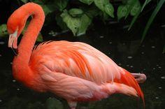 Flamingo Orange
