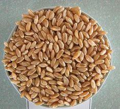Natural Health Remedies, Baby Knitting Patterns, Dog Food Recipes, Almond, Dog Recipes, Almond Joy, Almonds