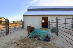 Winter Paddock Footing for Horse Properties - Smart Horse Keeping. Fence set up. Horse Paddock, Horse Arena, Horse Stables, Horse Farms, My Horse, Horses, Dream Stables, Dream Barn, Horse Barn Designs