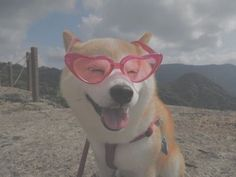 blocking out the haters Like Animals, Animals And Pets, Baby Animals, Funny Animals, Cute Puppies, Cute Dogs, Dogs And Puppies, Doggies, Cute Creatures