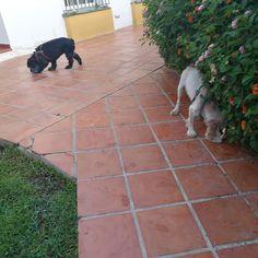 Ratos en casa con Bubu, Avanti, Thais, Odin y Chico 06 /17