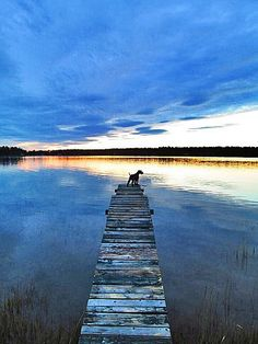 A dog watches the sunset at the end of a pier on a lake in Frostkåge, Sweden.