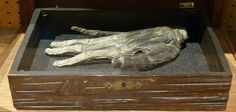 At the Whitby Museum in North Yorkshire is a strange artifact—a dismembered hand, dried and shriveled. It once belonged to a man who was hanged from the North Yorkshire, Yorkshire England, Male Hands, Macabre, Occult, Archaeology, Mythology, Maya, Mystery