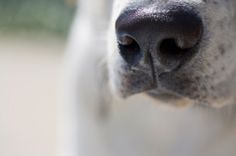 Scent Work for Dogs - Upcoming Classes - Highland Canine: Professional Dog Training Solutions Animal Law, Professional Dog Training, Animal Noses, Cat Nose, Terrier Breeds, Boston Terrier Dog, Dog Agility, Mans Best Friend, Dog Owners