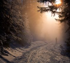 Winter Is Coming! See These 20 Wonderful Winter Photographs Winter Magic, Winter Snow, Winter Walk, Winter Light, Snow Light, Long Winter, Snow Scenes, Winter Scenes, Winter Beauty