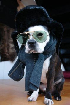 """when """"bunkers"""" arrives into my life, this is what he's wearing in the winter :) - ha!"""