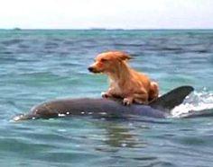 Delfín Salva Vida De Un Perro
