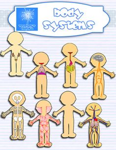 Human Body systems clipart $