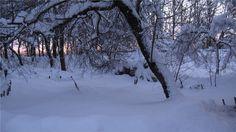 Украинская зима 27 (фото снято в этнографическом музее Пирогово два года назад)