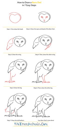 the 175 best drawing owls images on pinterest barn owls drawings