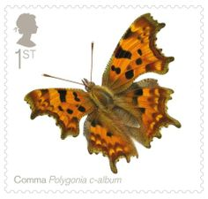 British Stamp 2013 - Comma Polygonia c-album Royal Mail Stamps, Uk Stamps, Royal Mail Postage, Postage Stamp Design, Postage Stamps, Butterfly Fairy, Penny Black, Mail Art, Stamp Collecting