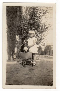 Pit Bull Terrier Dog in Pram Playing with Little Girl Original Vintage Photo