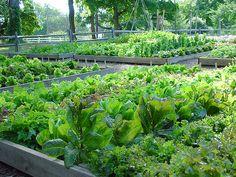 Fordhook farm at Burpee Gardens