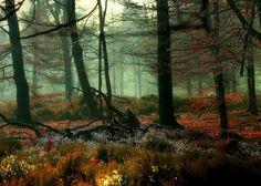 deep forest - http://www.pinterest.com/vladimirmegre/pins/