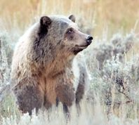 Custer National Forest Link     Beartooth Pass & Redlodge  Montana