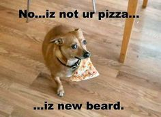 1000 Images About Funny Dog Memes On Pinterest Funny