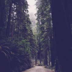 Into the woods by abduzeedo