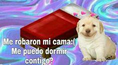 Memes Amor, Dankest Memes, Cute Love Memes, Funny Love, Cartoon Memes, Cartoon Pics, Soft Baby, Romantic Memes, Funny Spanish Memes