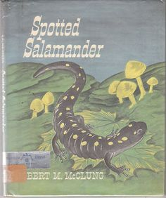 Spotted Salamander 1964 Robert M McClung Vintage Picture Book Nature | eBay