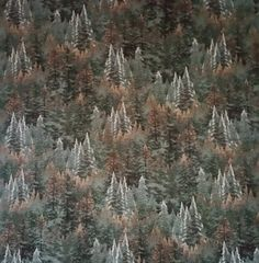 Thomas Kinkade Evergreen Forest Dark Forest color by ZoeAnnesEtc