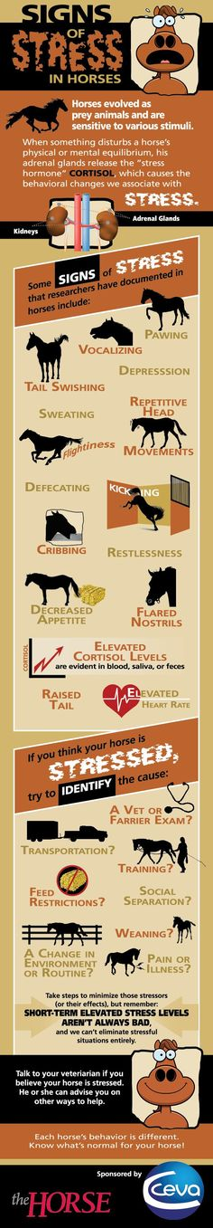 Signs of Stress in Horses - TheHorse.com | Learn about the common signs your horse might show when under stress and ways to mitigate the possible causes using this new #infographic from #TheHorse and CEVA.