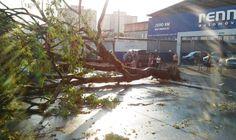 Cidades da região contabilizam estragos após ventania e chuva forte