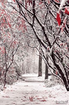 Russia, winter, cold, snow, trees, fuzzy or fluffy texture of the snow, white, brown, black, red, ice, branches make a feathery or lacey texture when there's ice on them