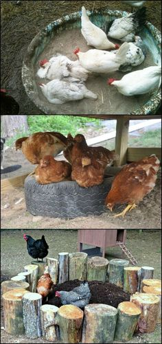 Chicken Coop - Dust Bath Ideas for Your Chickens! theownerbuilderne... Many people new to raising chickens are not aware of this, but it is one of the most important things chooks should have for overall health. It is as important as food and water! Building a chicken coop does not have to be tricky nor does it have to set you back a ton of scratch.