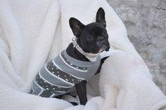 Bark Avenue's Houndstooth Dog Collar - Lulu's Likes