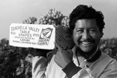 Richard Chavez, younger brother of Cesar Chavez, proudly displaying a lug of grapes emblazoned with the union label from the Larson ranch in California's Coachella Valley, which had just signed a UFW contract in 1970, after 5 years of strikes & boycotts.