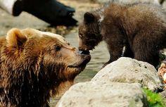 bearme and beara