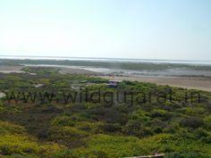 Priotan Island by Wild gujarat,Jamnagar,
