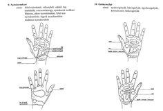 Kézdiagnosztika-reflexológia