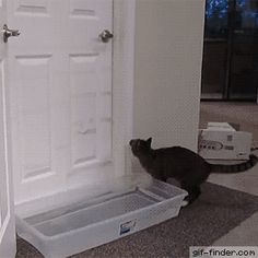 Clever Cat Opens Doors and Outsmarts Owner | Gif Finder – Find and Share funny animated gifs