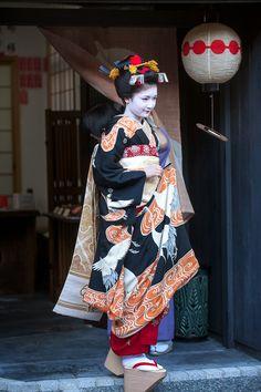 maiko naoai wearing a stunning crane kimono for her misedashi (debut) | japanese culture