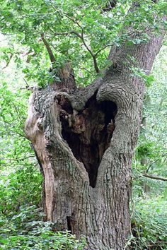 ...heart shaped hole in a tree...