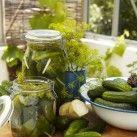 Hela saltgurkor - Recept från Mitt kök - Mitt Kök Pickles, Cucumber, Food, Meals, Pickling, Cauliflower, Yemek, Pickle, Eten