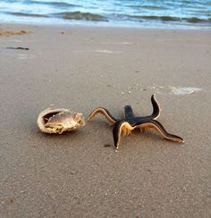 A Live Starfish On The Beach -- AWESOME!