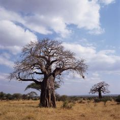 Tanzania's Best Places to Visit - Top Attractions in Tanzania: Tarangire National Park, Northern Tanzania