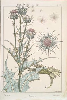 Maurice Pillard Verneuil (French, 1869-1942)    Thistle Study, Lithograph, Eugene Grasset's Plants and their Application to Ornament, Paris, 1896