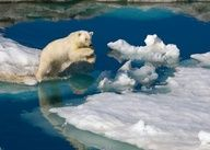 cd9bc957dce 79 Best Arctic images