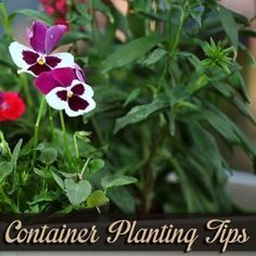 Pick Containers with Your Plants and Decor in Mind | Garden Club