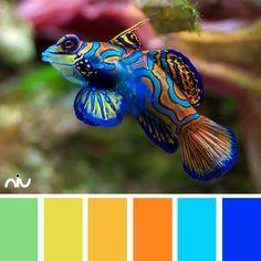 Fish Color Palette